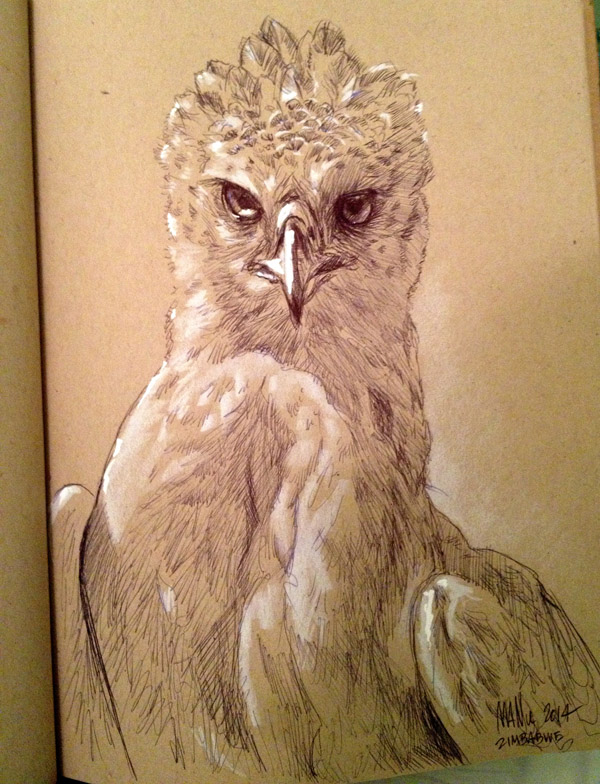 A drawing of one of my favorite birds that I've seen so far
