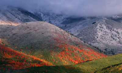 Three seasons of foliage, red maples and fall snowstorm near Midway, Utah.