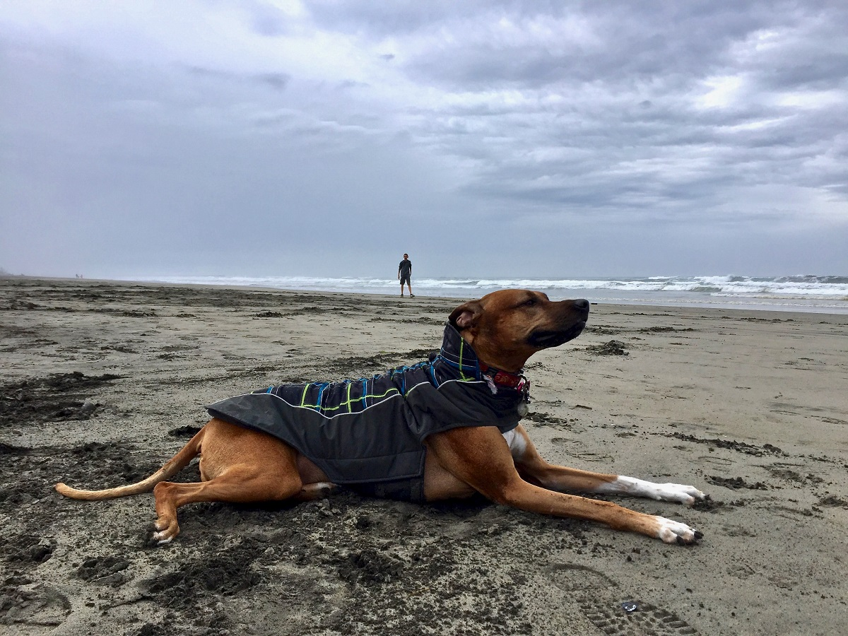 capedisappointment_pup