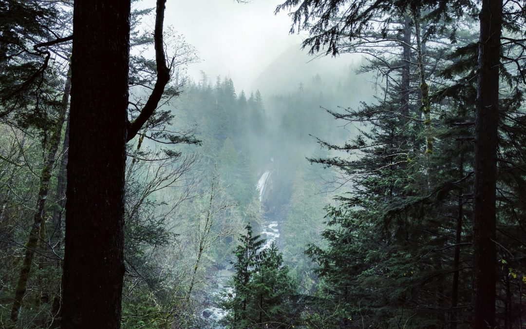 Trail Report: Twin Falls