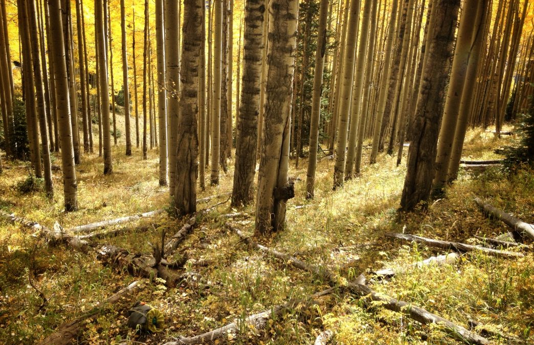 Fall in Telluride: 5 Adventures To Do This Autumn