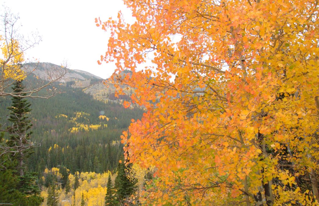 Fall Foliage in Colorado: 5 Colorful Adventures Near Boulder and Denver