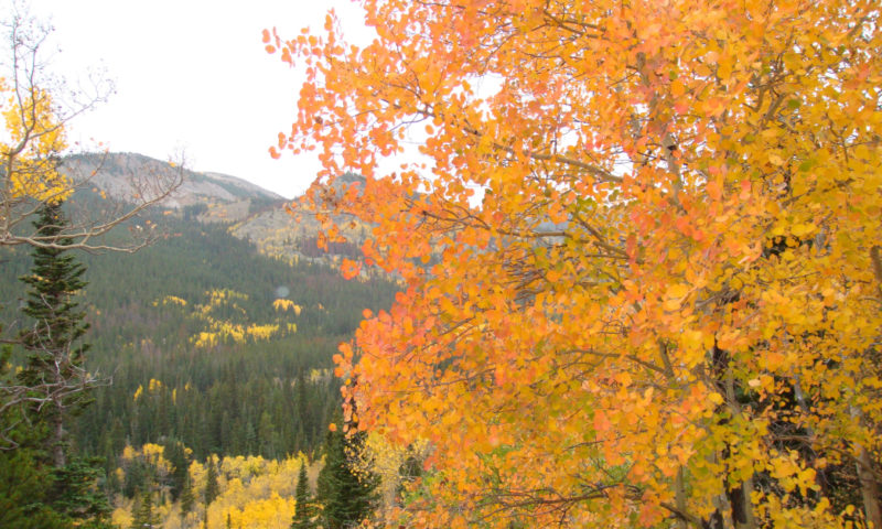 Colorado aspens fall