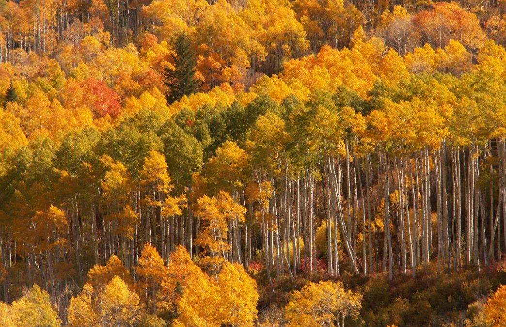 All Aglow: 5 Great Fall Foliage Hikes in the Wasatch