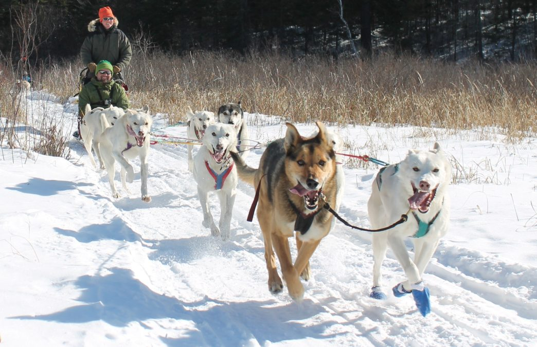 The Top 5 Dog Sledding Adventures in Minnesota