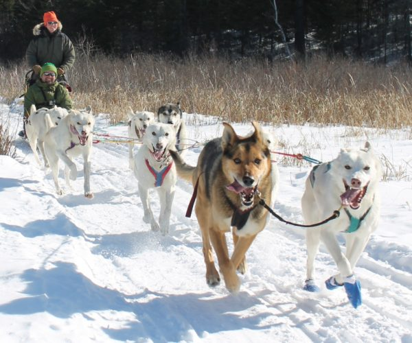 Positive Energy Outdoors has more than 20 years of experience offering dog sledding trips.
