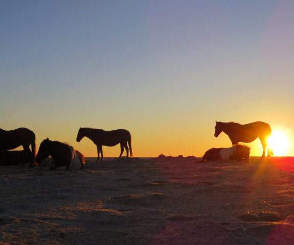 20170110 assateague-august-2014-sunrise-horses