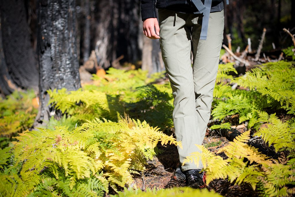 Person walking in the forest in between yellow shrubs.