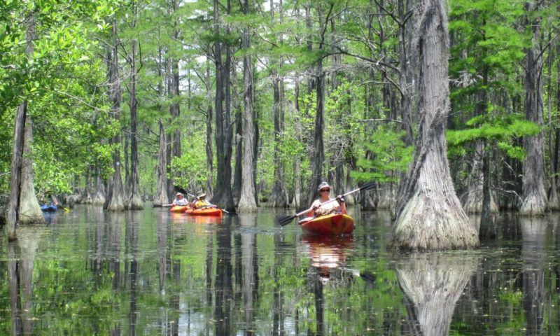 Kayakers at George L. Smith State Park, one of six great state parks for fall paddling.