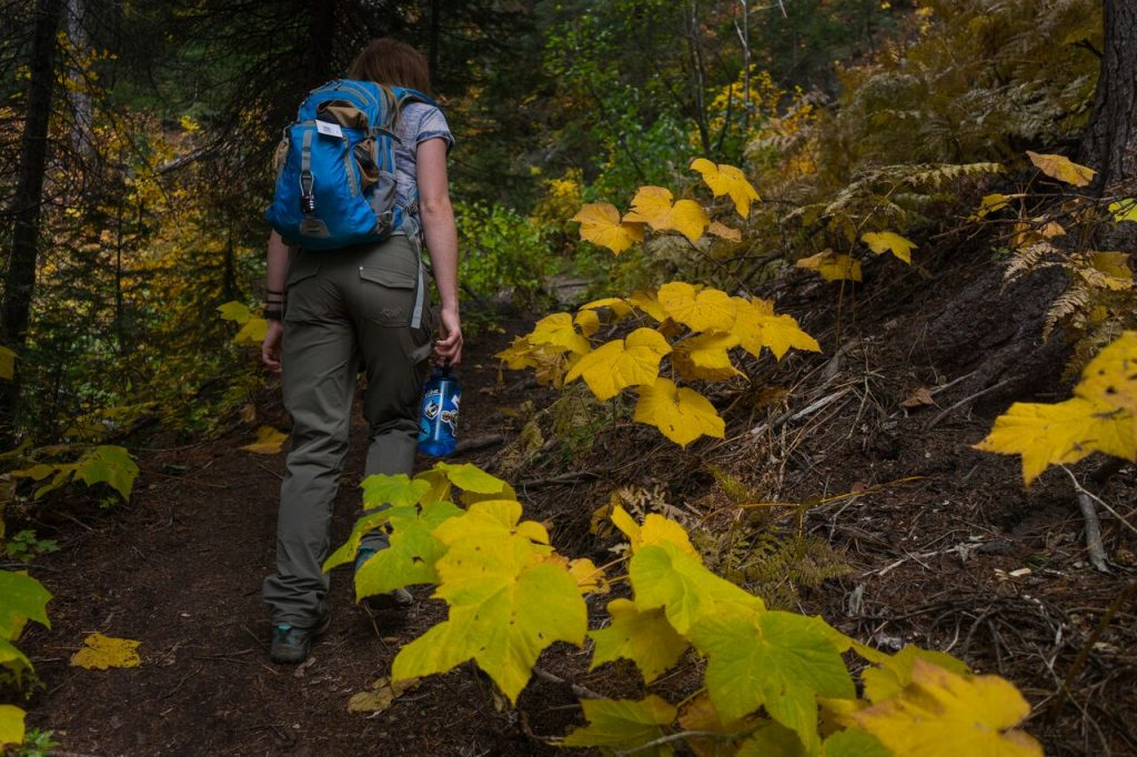 A woman in women's hiking pants and with a backpack walking up a forest trail, yellow leaves on the right.