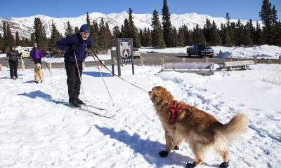 Dog Skijoring preparation with a man and a dog in a snowy forest.