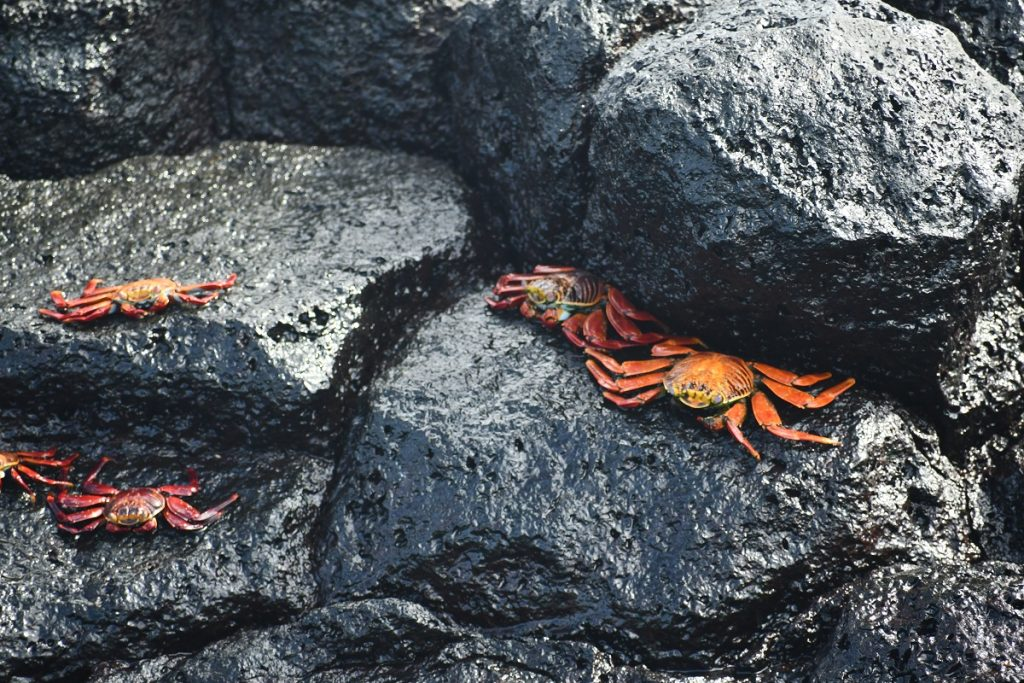 Galapagos, Isolated Galapagos Archipelago Offers Spectacular Adventure