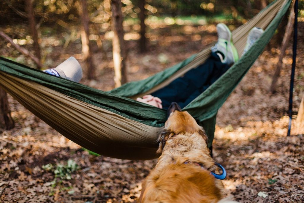 The Essential Guide to Hammocks - dog biting hammock with person sleeping