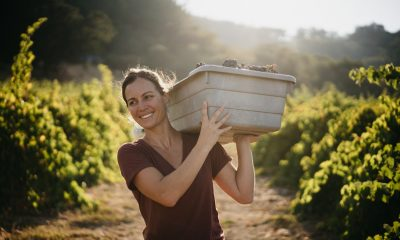 Wine and Adrenaline article, woman carrying grapes in wine country, dressed in KUHL clothing