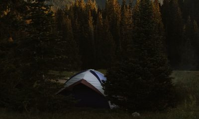 Camping Traditions - A tent placed in a pine forest, dusk