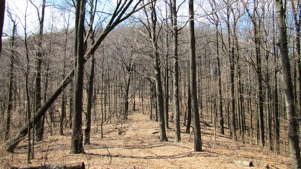 5 Great Winter Hiking Trails - Cumberland Trail