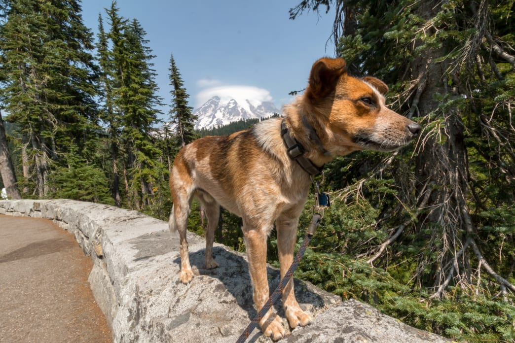 , How to Travel 18,000 Miles With Your Dog