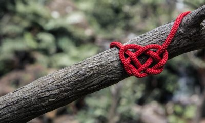 Knot by Will O unsplash