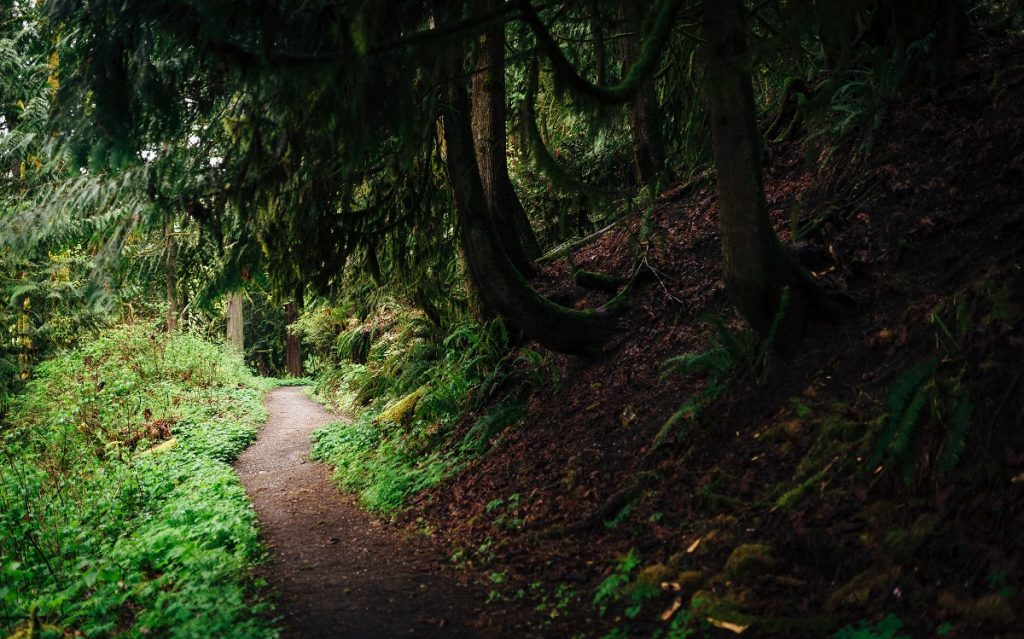 trail surrounded by green trees