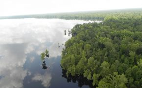 00-20170313_Virginia_GreatDismalSwamp_Paddling