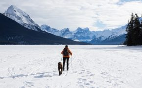 person nordic skiing with dog