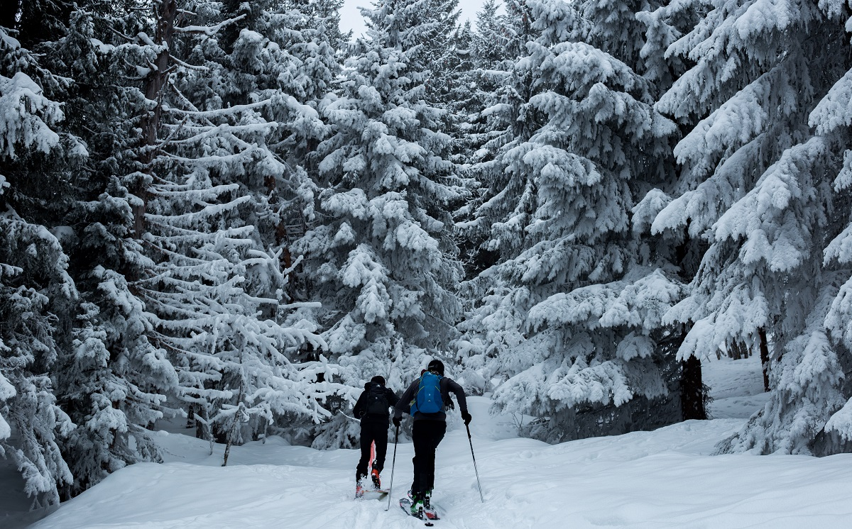 two people skiing on snow near pinetrees
