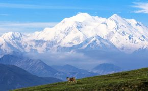 Wandering in front of the high one, Denali.