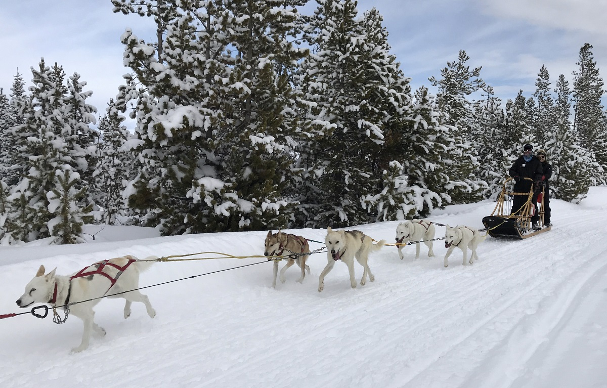 GrandCounty Dogsledding