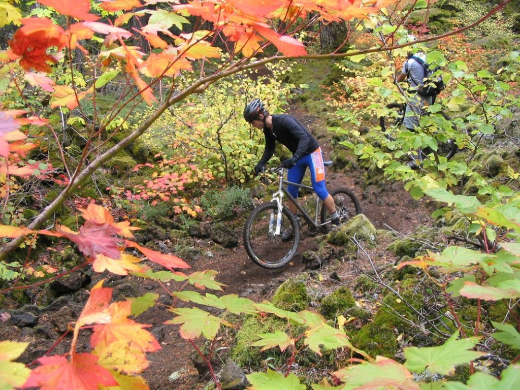 man on a mountain bike in the woods