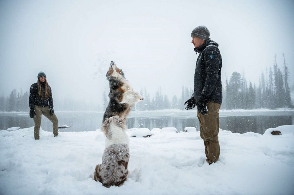two people and two dogs on snowy ground