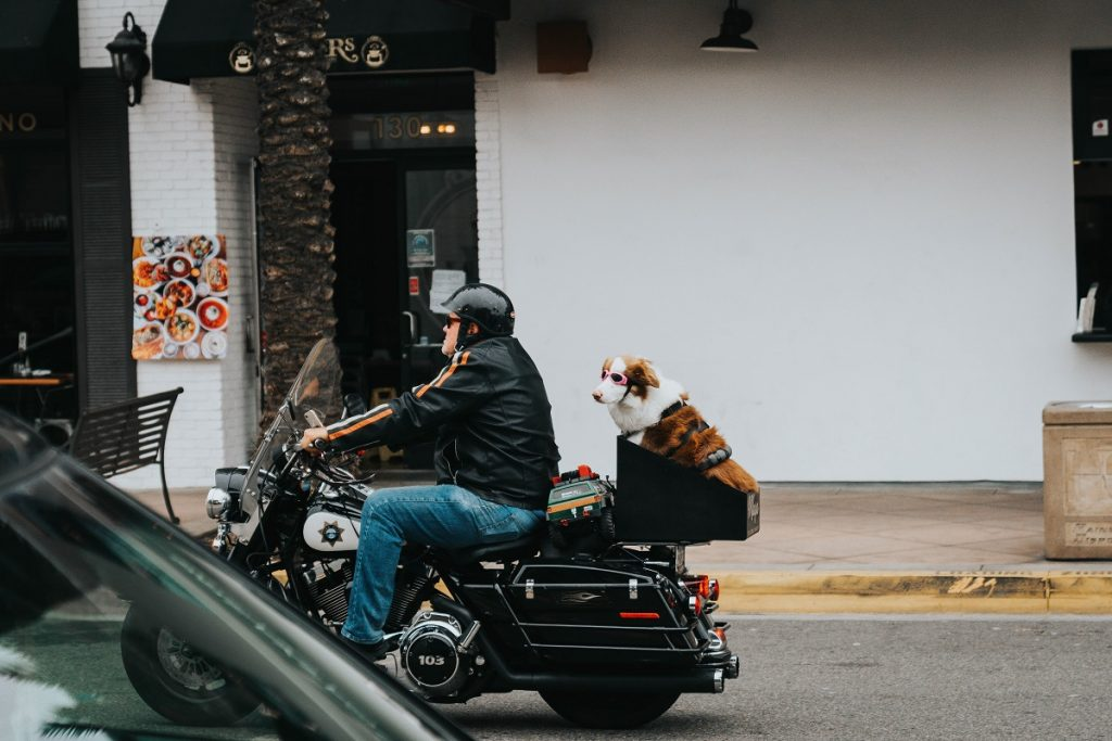 man in black jacket and blue jeans riding motorcycle with a dog in the back