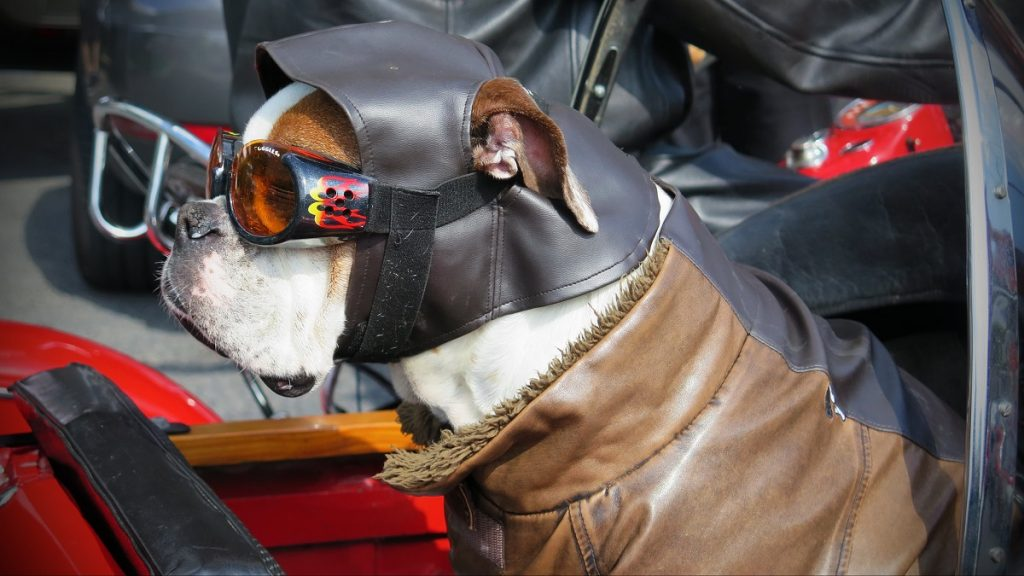 white and brown dog in brown leather jacket