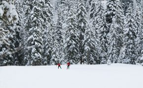 two people in red clothes standing on snowy ground with pine trees in background