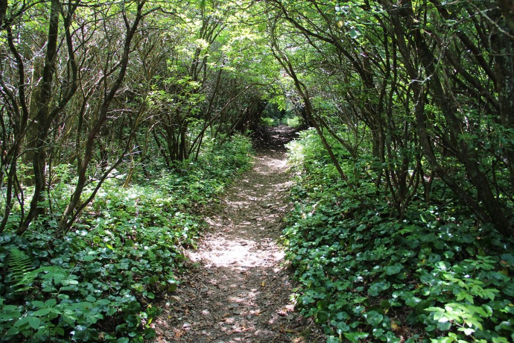 trail road between green trees and bushes