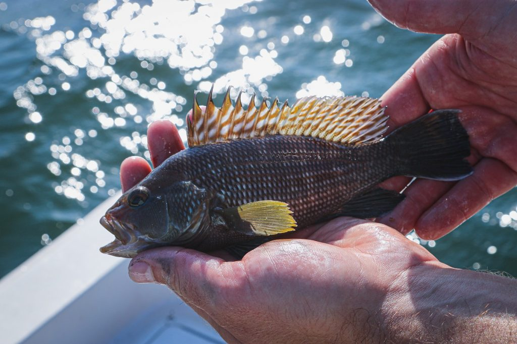 gray fish with yellow fins on persons hand