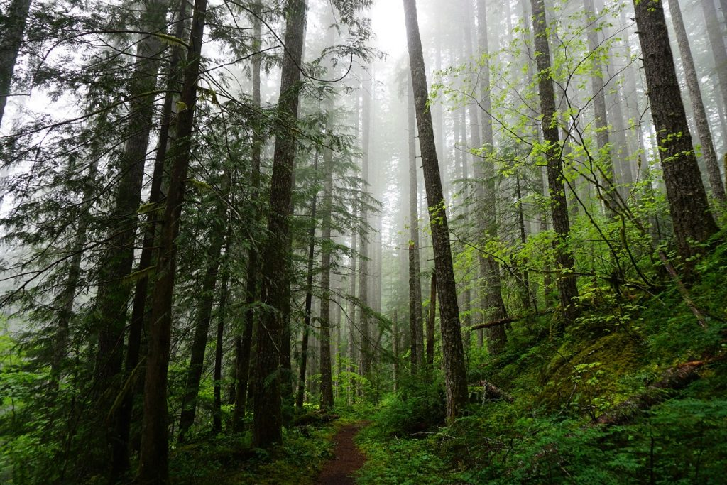 Forest Bathing 3