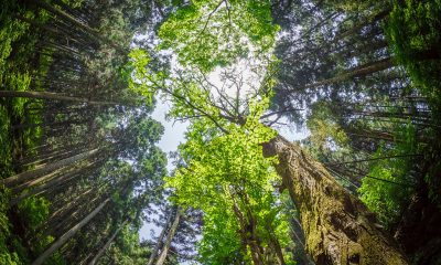 tall green trees during daytime