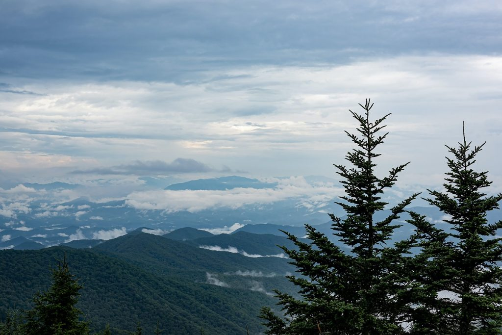 two pine trees in front of gray mountains with white clouds
