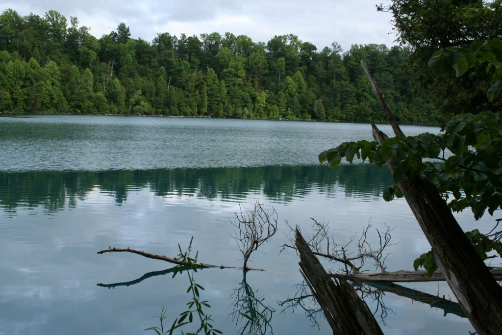 green body of water in front of green trees
