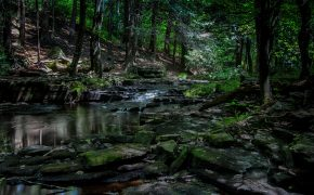 water flowing on gray rocks surrounded by green trees