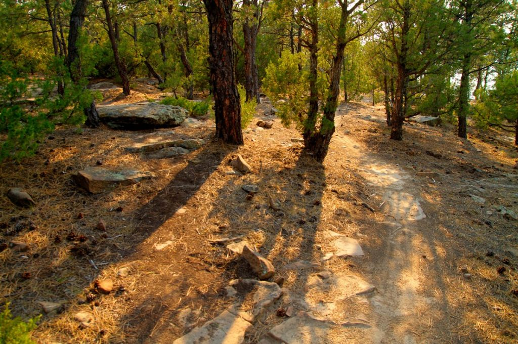 trail path in forest