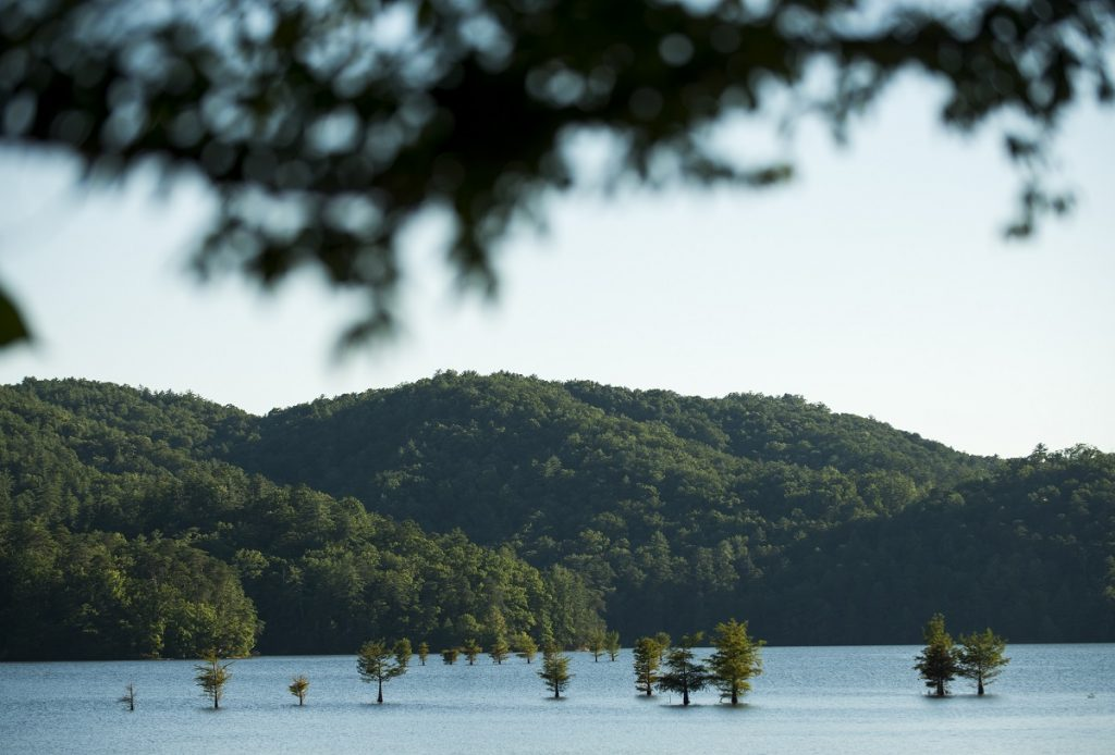 pine trees rising from body of water