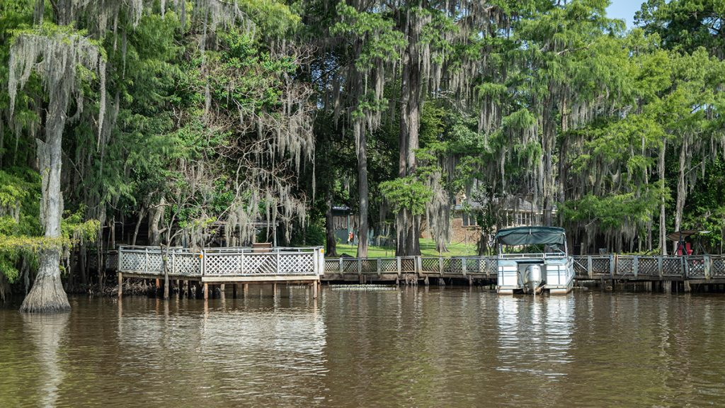 white pontoon boat on water in swamp