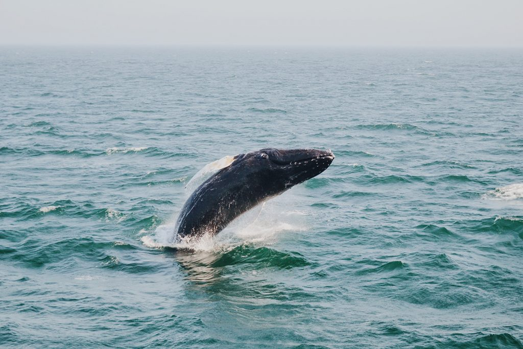 whale above body of water