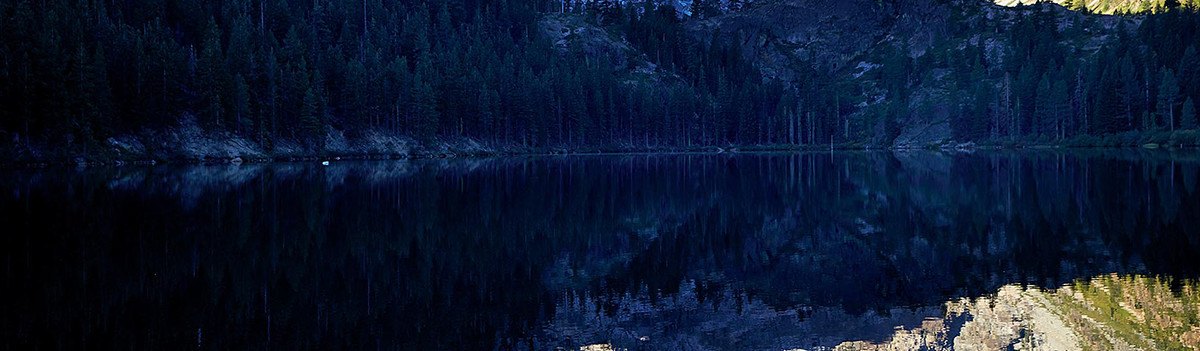 A zoomed in image of a pine forest surrounding a lake.