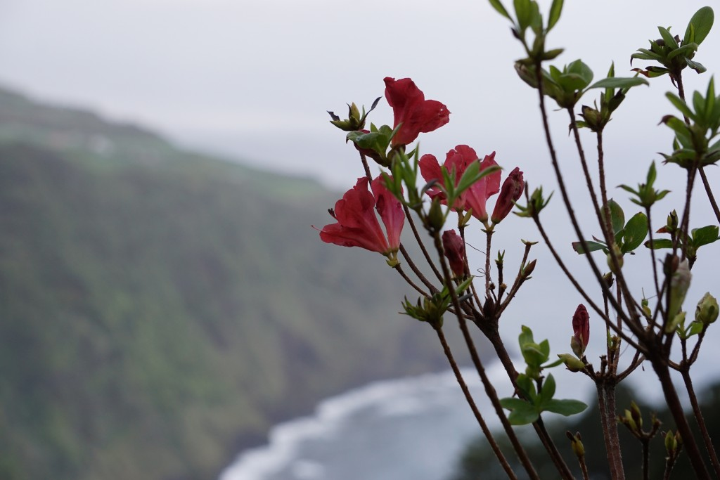 Azores_Islands_Coastline